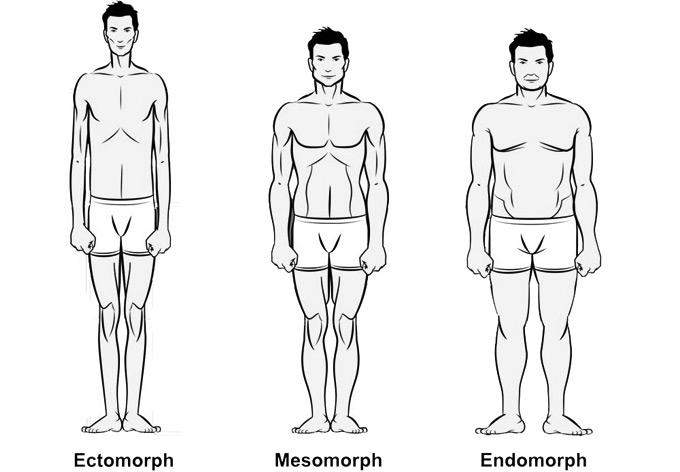 Эндоморфный фото