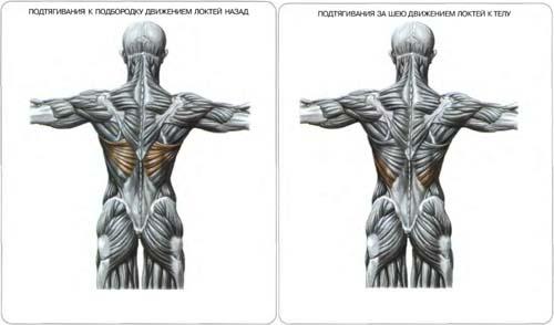 Ромбовидные мышцы