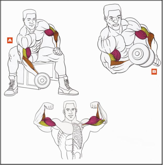 Накачать мышцы бицепса в домашних условиях