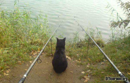 на рыбалку по субботам ездишь